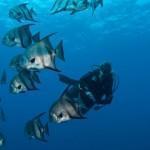 ReefMinistries